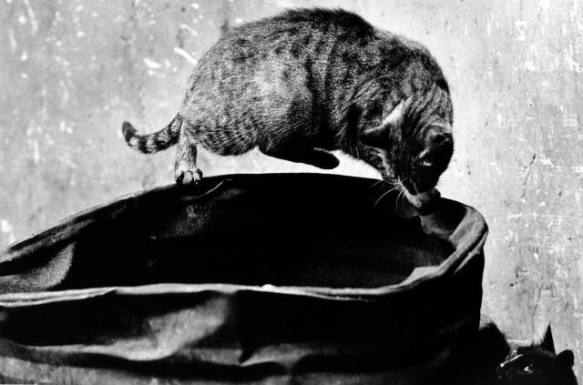 «Каирские коты». Автор Уолтер Ротуэлл (18)