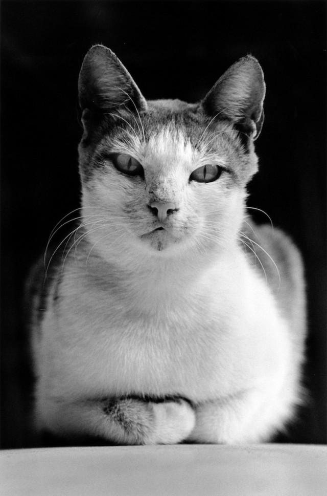 «Каирские коты». Автор Уолтер Ротуэлл (19)