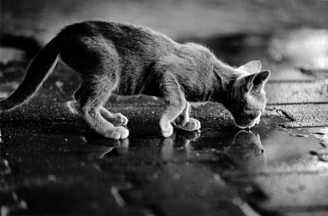 «Каирские коты». Автор Уолтер Ротуэлл (20)