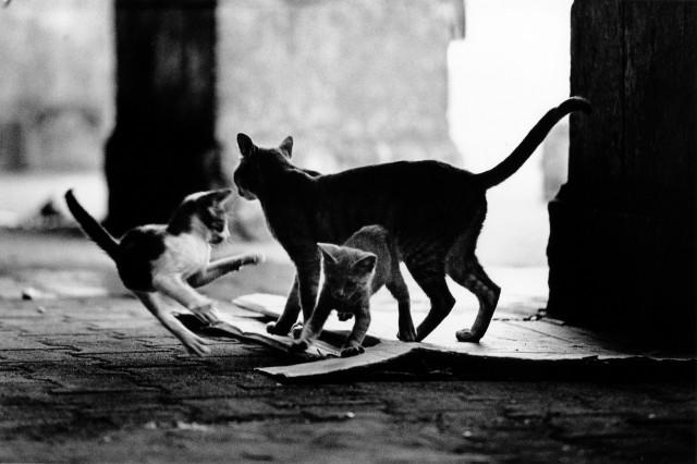 «Каирские коты». Автор Уолтер Ротуэлл (23)