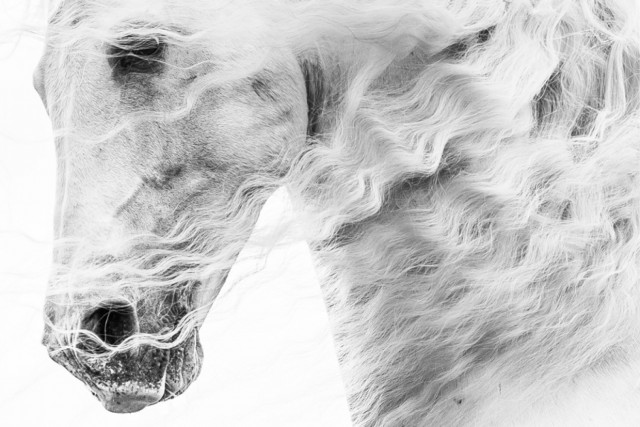 «Ветролов». 3 место в категории «Люди и животные», 2020. Автор Нина Юнглин