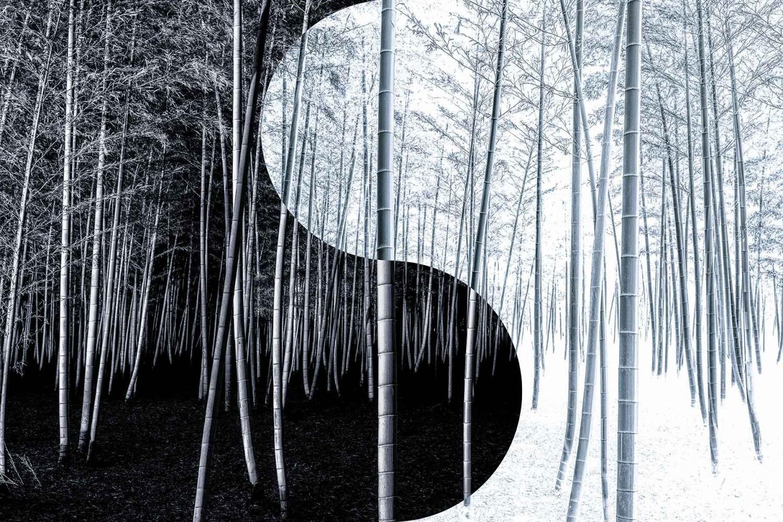 «Инь и ян». Бамбуковый лес. Гран-при и 1 место в категории «Файн-арт», 2020. Автор Такео Хиросе