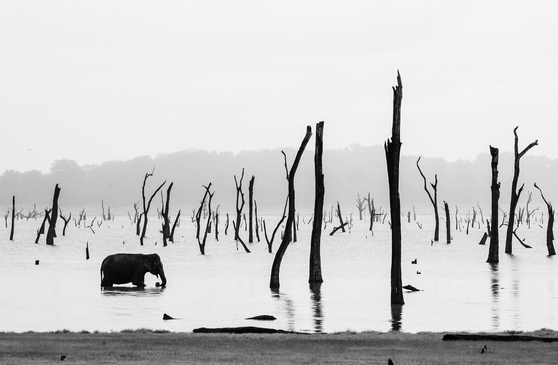 «Одинокий слон». Финалист в категории «Пейзаж и природа», 2020. Автор Чиа-чи Янг