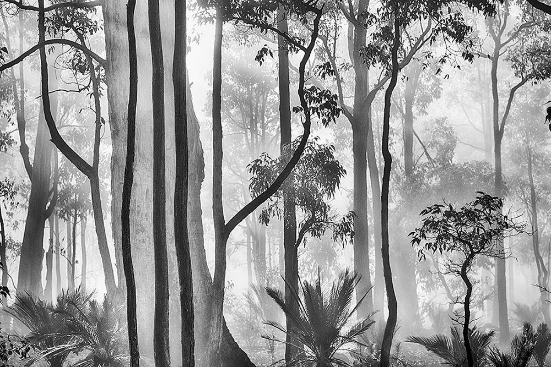 «Чаща». 1 место в категории «Пейзаж и природа», 2020. Автор Эндрю Даволл
