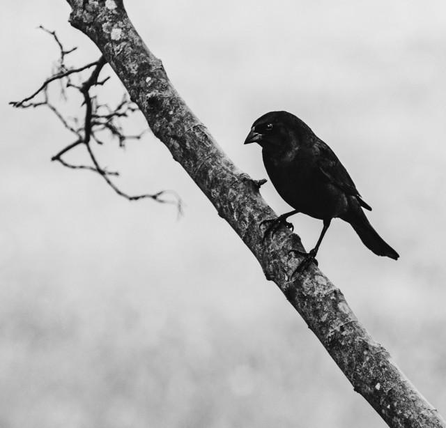 «Чёрная птица». Финалист в категории «Люди и животные», 2020. Автор Амадеу Мартинез