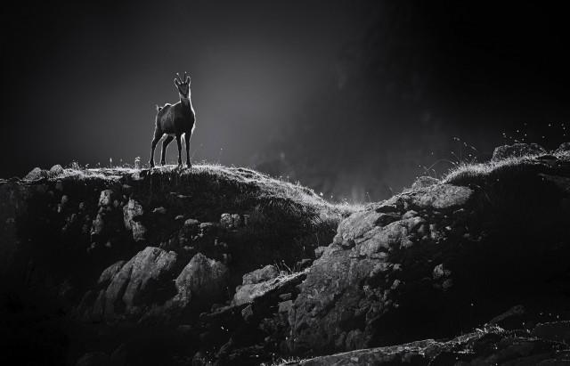 «Горный козёл». 1 место в категории «Люди и животные». Автор Алесь Кривец