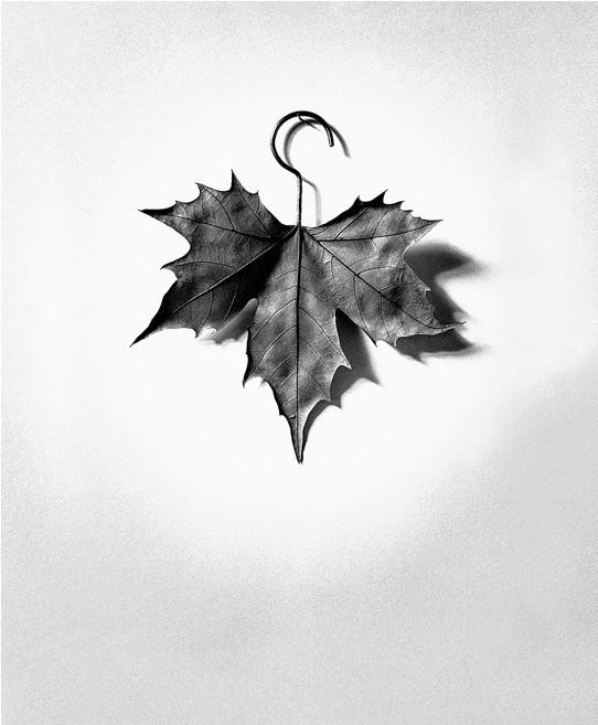 Лист-вешалка, 1999. Автор Чема Мадоз