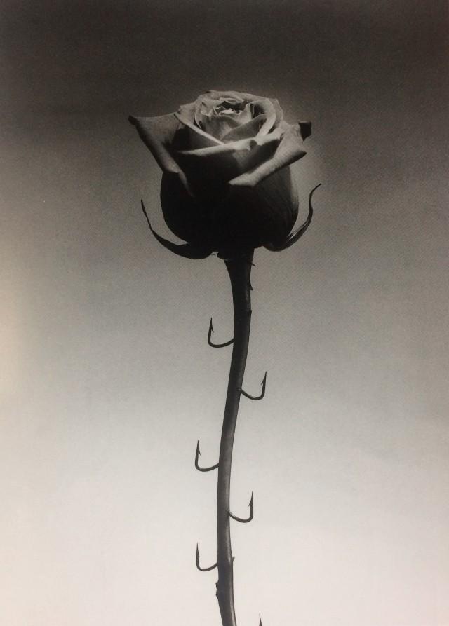 Роза, 1996. Автор Чема Мадоз