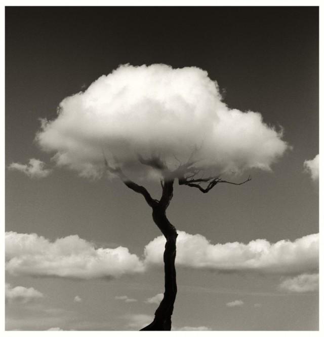 Дерево с облаком. Автор Чема Мадоз