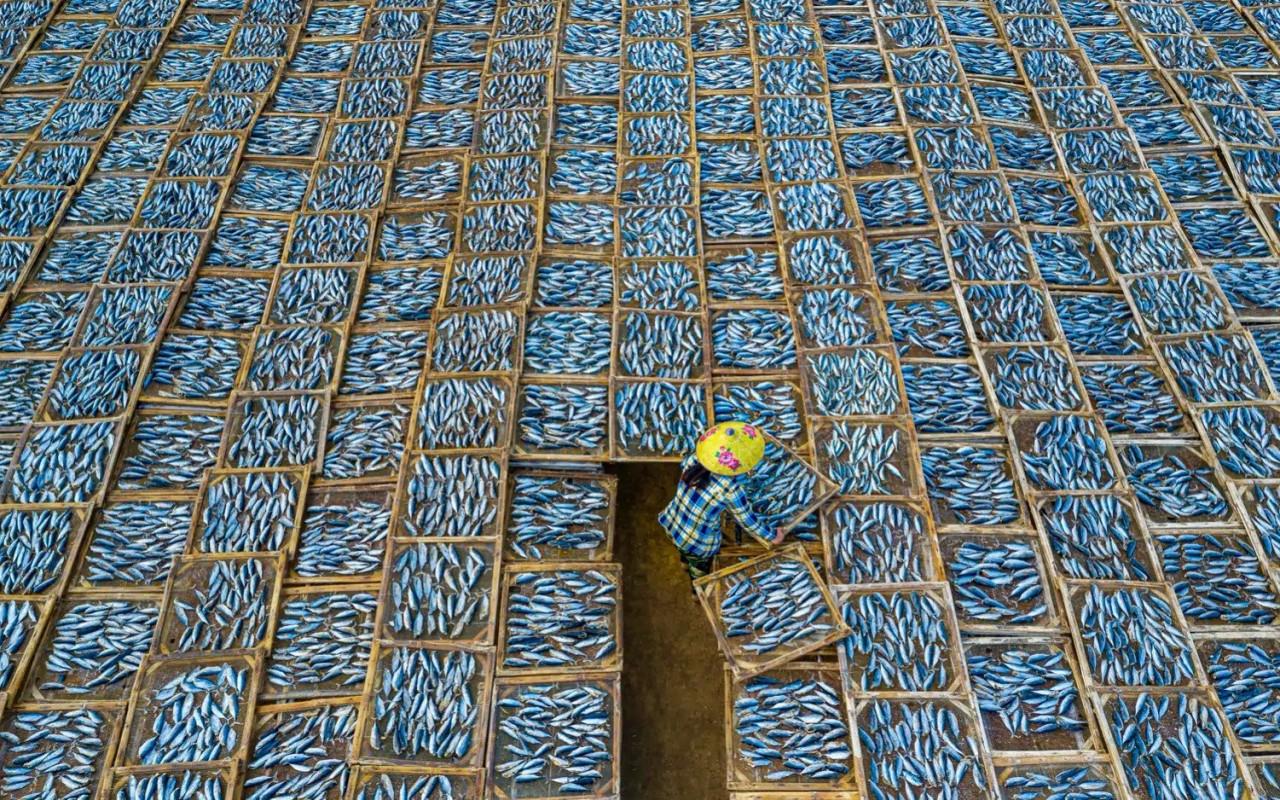 Специальное упоминание в категории «Туристическое портфолио», 2020. Рыбный рынок, Вьетнам. Фотограф Фан Кхань