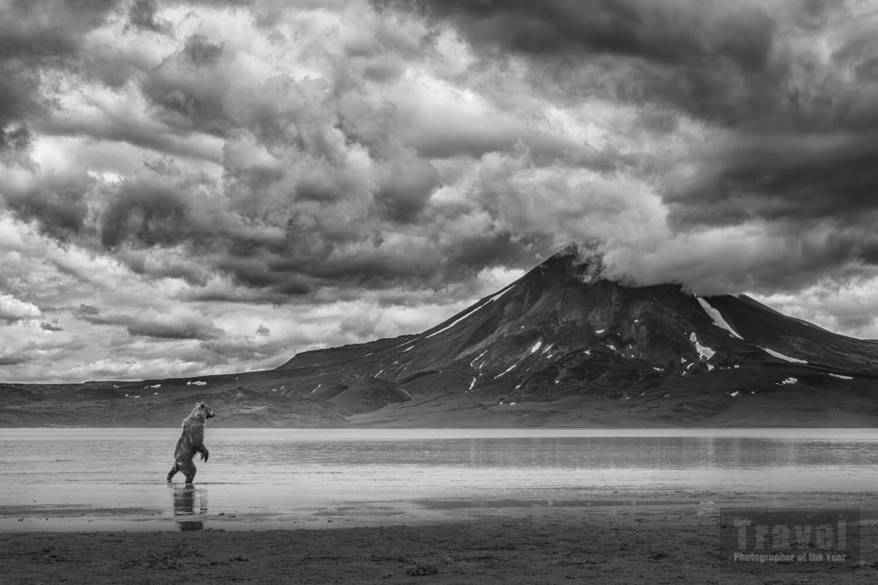 2-е место в категории «Туристическое портфолио», 2020. Медведь, охотящийся за лососем на Камчатке. Фотограф Ричард Ли