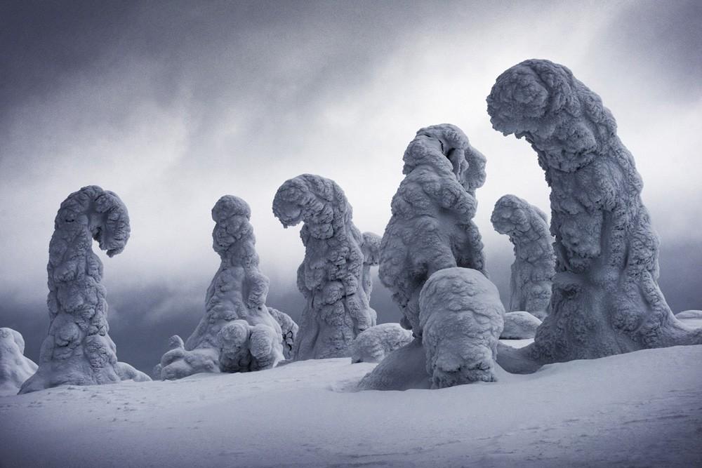 Замёрзшие деревья в финской Лапландии. 2 место в категории «Искусство путешествий», 2019. Автор Игнасио Паласиос