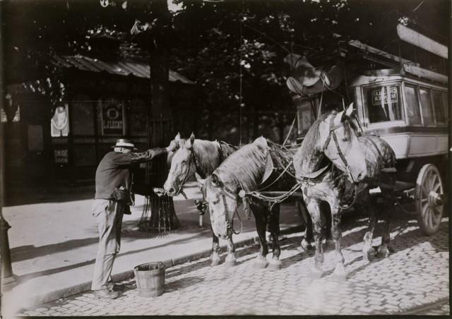 Кучер поит лошадей на конечной остановке омнибуса (Гар дю Нор), Париж, 1895-1905. Автор Поль Женью (Paul Géniaux)