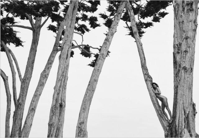 Кендалл Дженнер на дереве. Автор Расселл Джеймс
