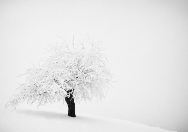 «Зимнее хайку». Автор Андрей Бачу (34)