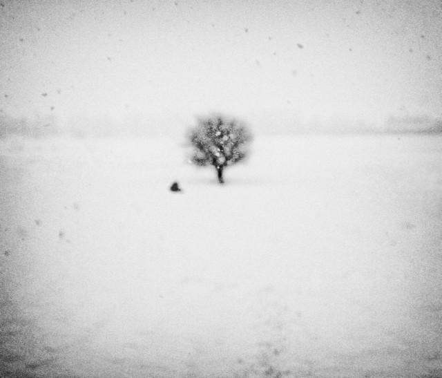 «Зимнее хайку». Автор Андрей Бачу (30)