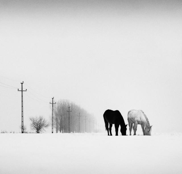 «Зимнее хайку». Автор Андрей Бачу (5)