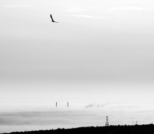 «Зимнее хайку». Автор Андрей Бачу (6)