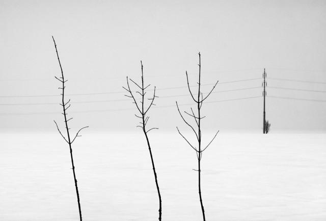 «Зимнее хайку». Автор Андрей Бачу (8)