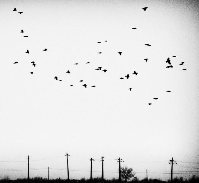 «Зимнее хайку». Автор Андрей Бачу (19)