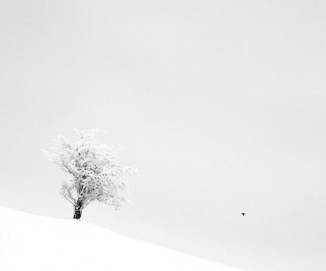«Зимнее хайку». Автор Андрей Бачу (23)