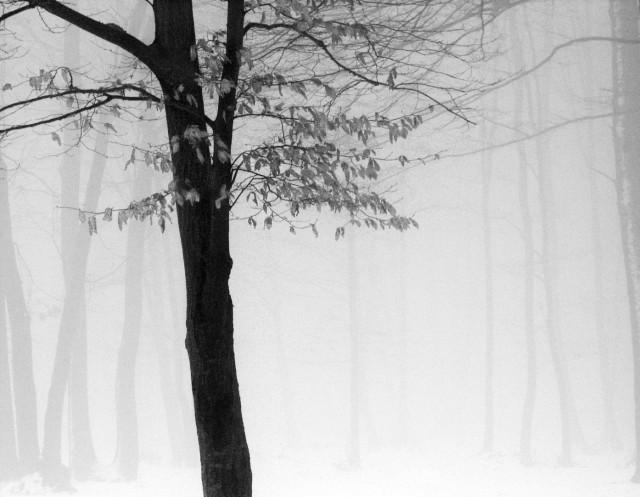 «Зимнее хайку». Автор Андрей Бачу (4)