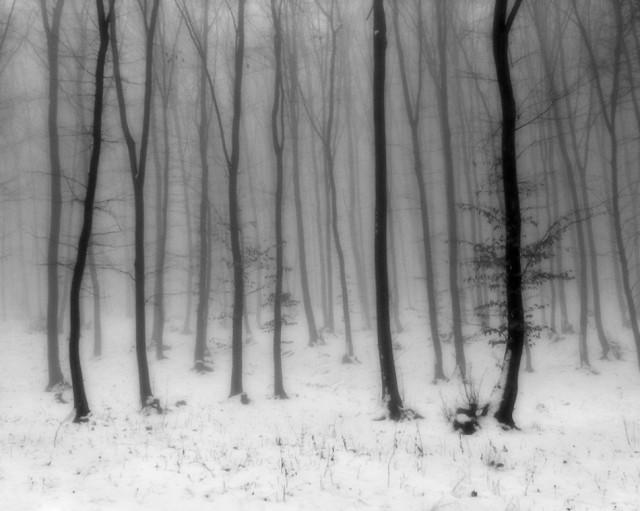 «Зимнее хайку». Автор Андрей Бачу (3)