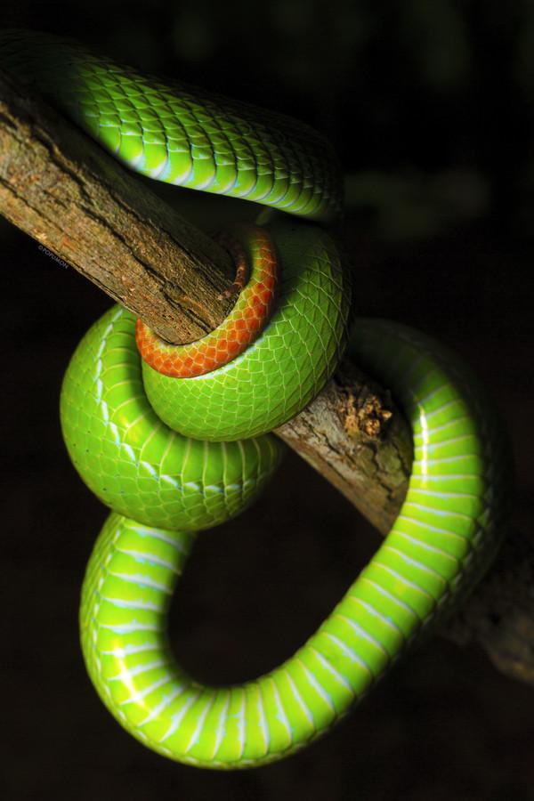 Картинки яда змеи