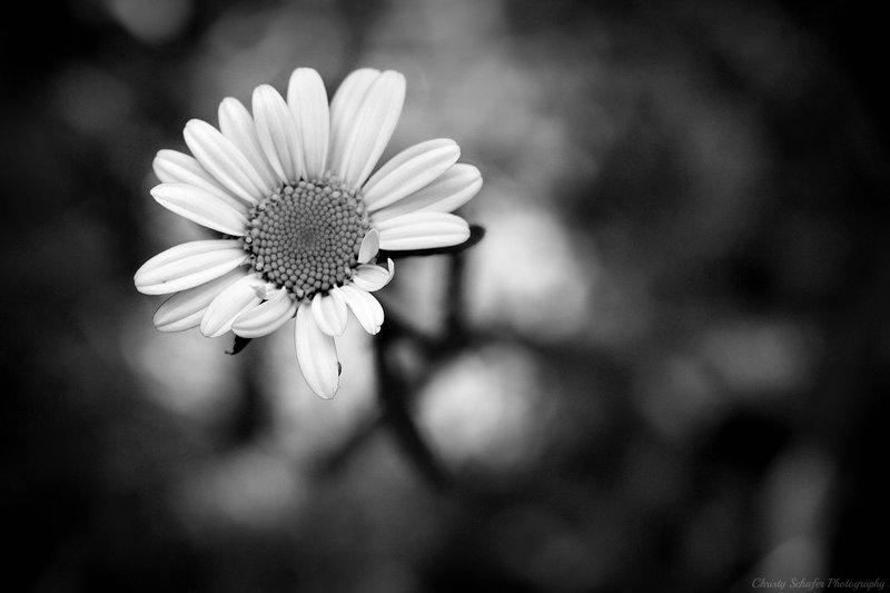 черно белое картинки