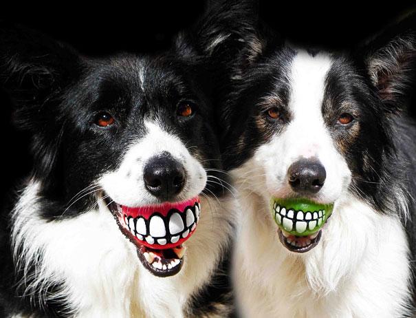 Мячик для собаки Rogz Grinz