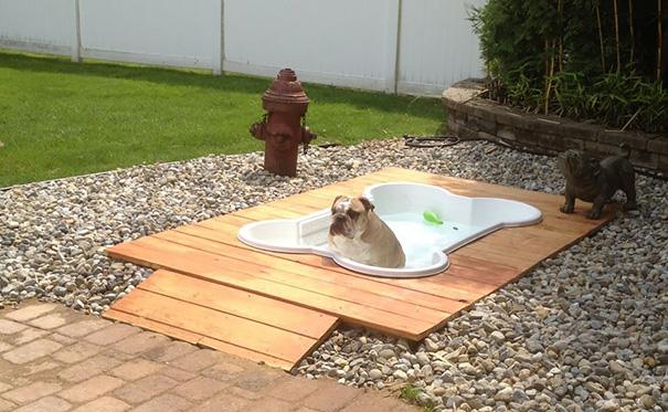 Собачий бассейн