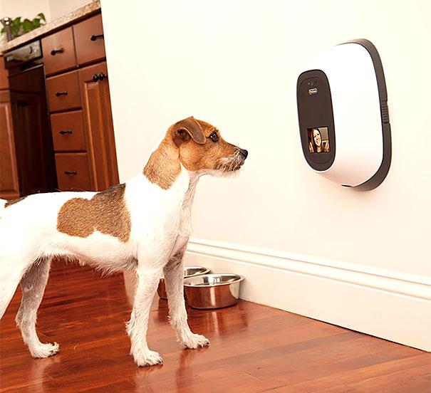 PetChatz - интерактивное устройство для видеочата с питомцем