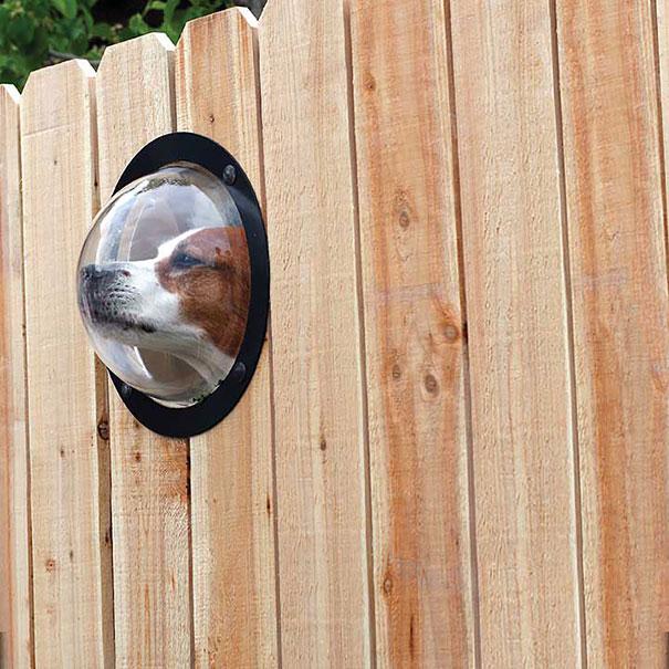 Заборное окно для собаки