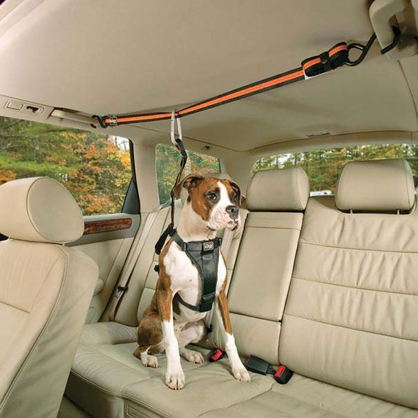 Автомобильный ремень безопасности для собак от Zip Line