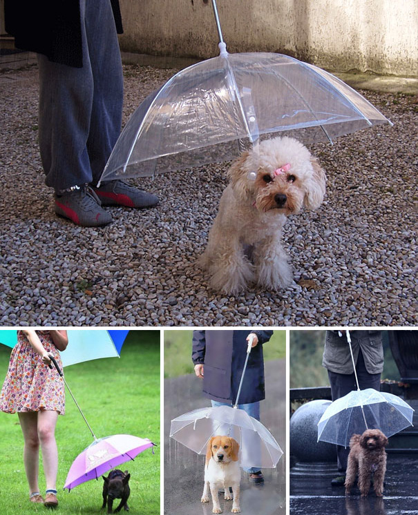 Собачий зонт