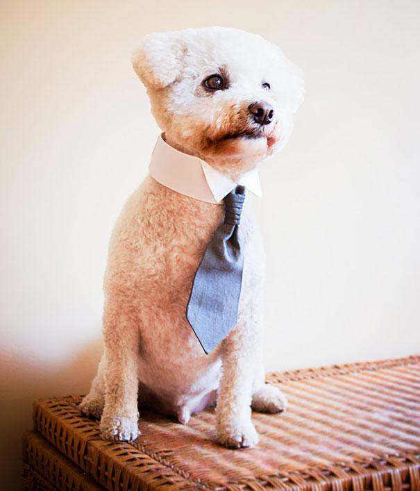 Собачий воротник-галстук