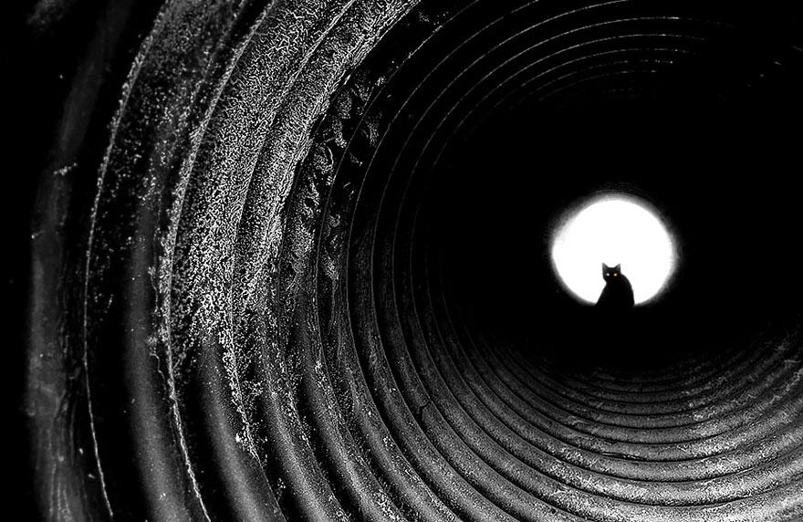 Таинственная кошачья жизнь в чёрно-белых фотографиях-114