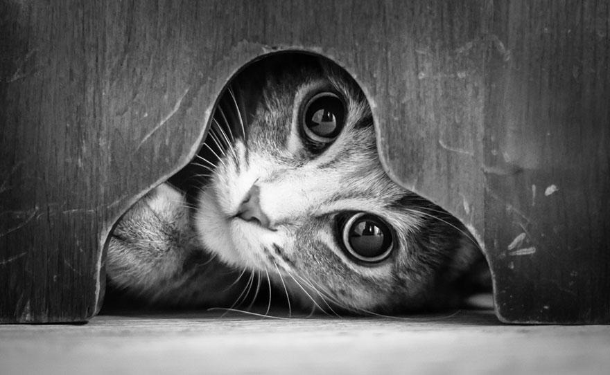 Таинственная кошачья жизнь в чёрно-белых фотографиях-1