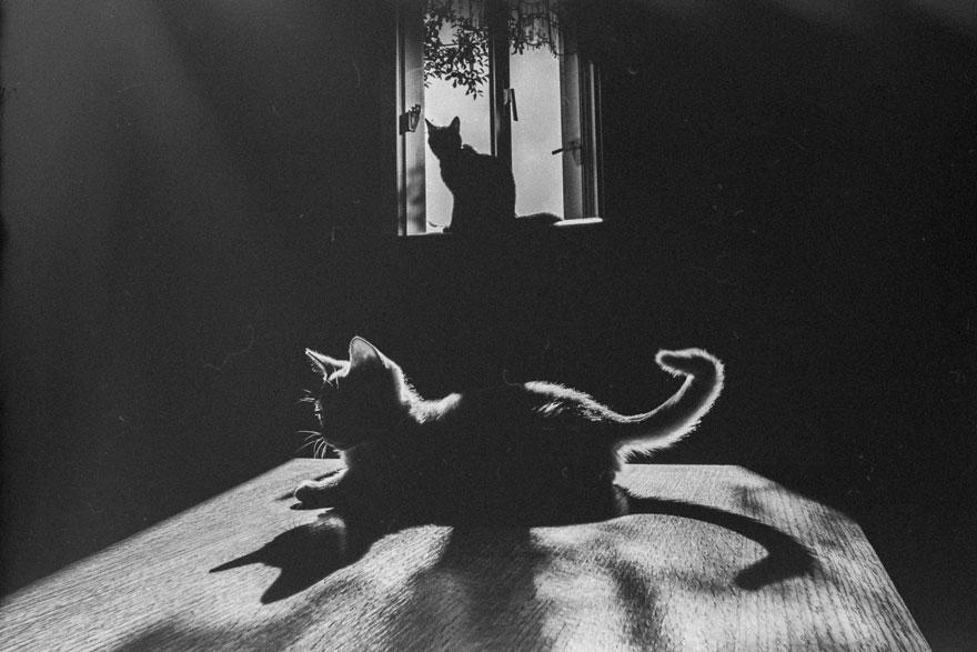 Таинственная кошачья жизнь в чёрно-белых фотографиях-21