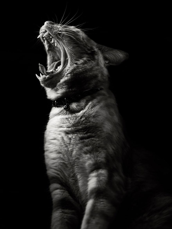 Таинственная кошачья жизнь в чёрно-белых фотографиях-1011