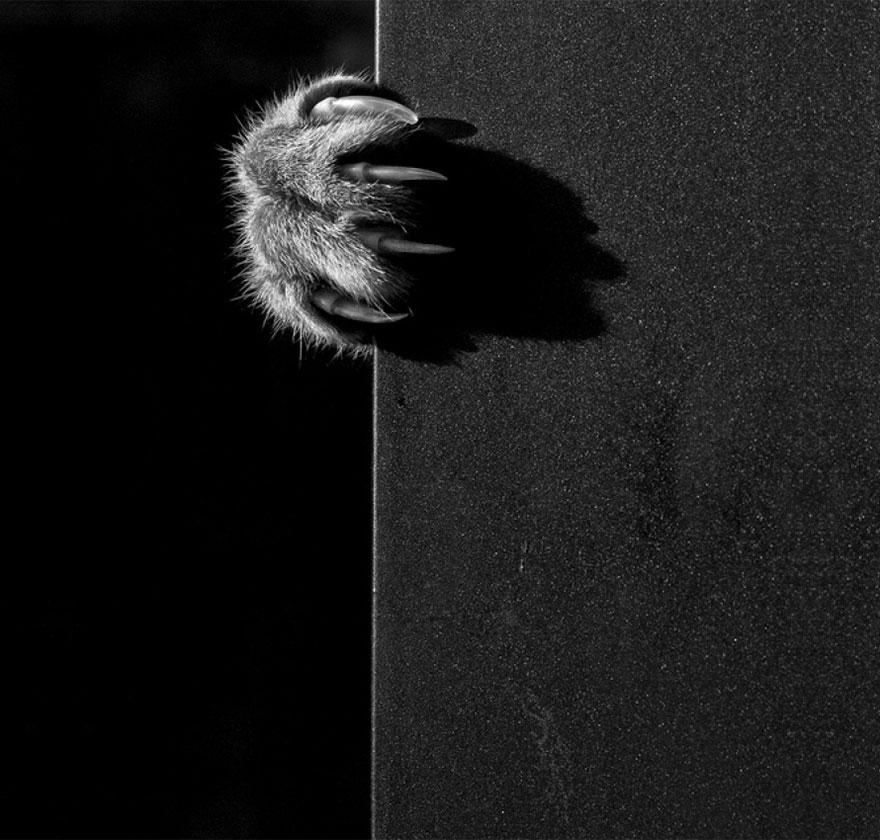 Таинственная кошачья жизнь в чёрно-белых фотографиях-28