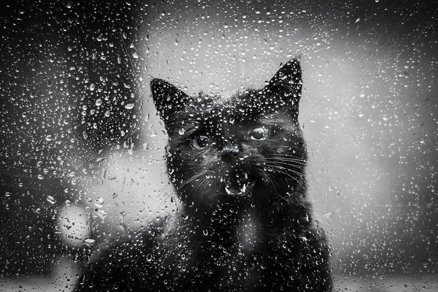 Таинственная кошачья жизнь в чёрно-белых фотографиях-36