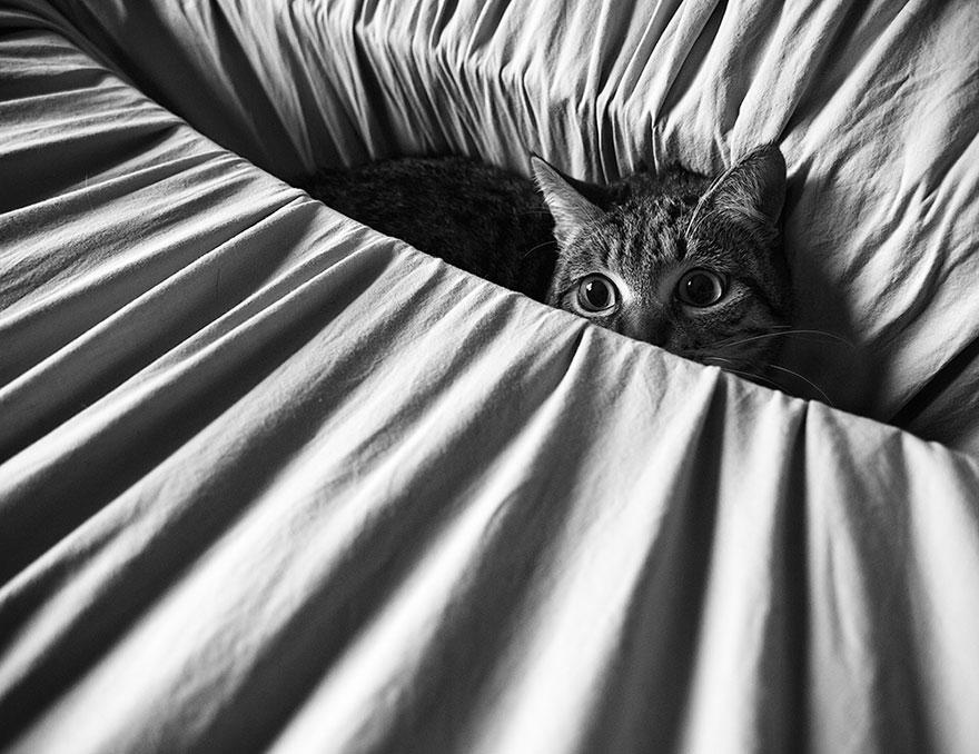 Таинственная кошачья жизнь в чёрно-белых фотографиях-39