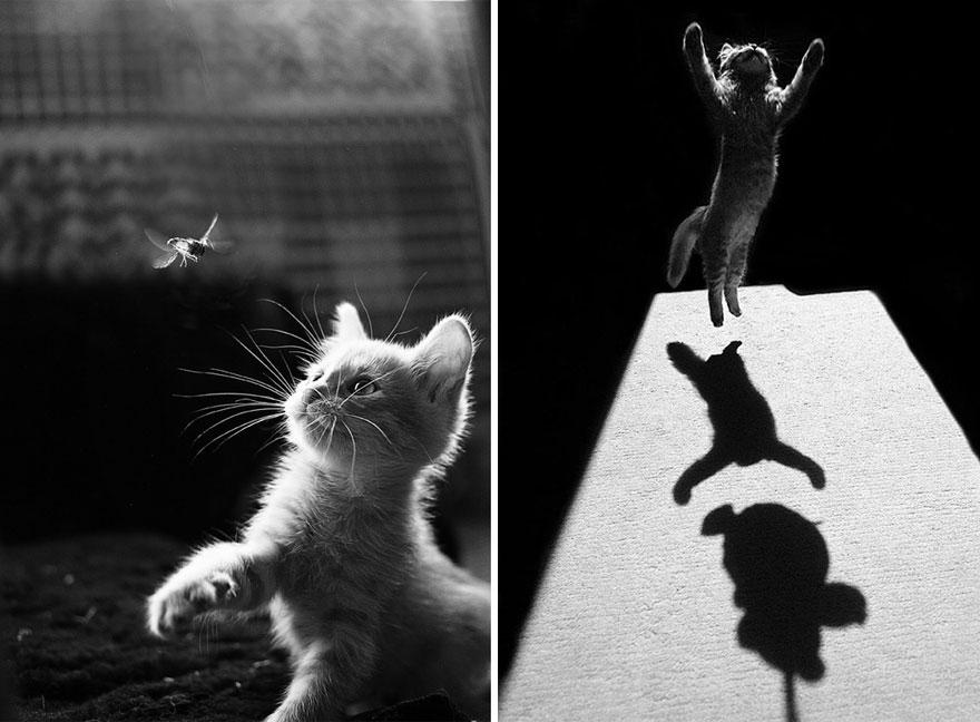 Таинственная кошачья жизнь в чёрно-белых фотографиях1