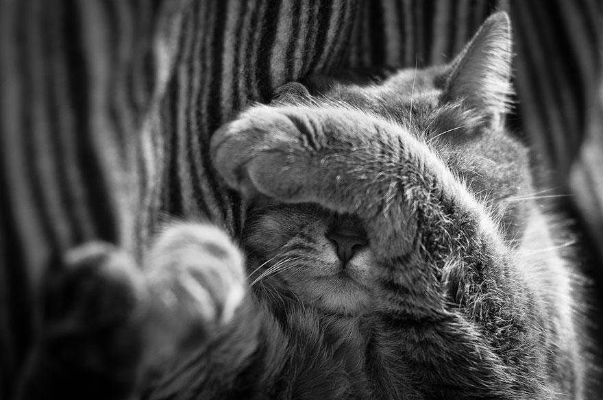 Таинственная кошачья жизнь в чёрно-белых фотографиях-7