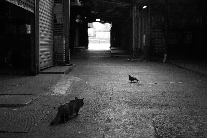 Таинственная кошачья жизнь в чёрно-белых фотографиях-11