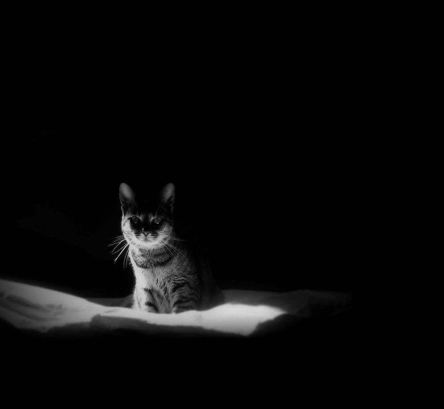 Таинственная кошачья жизнь в чёрно-белых фотографиях-9