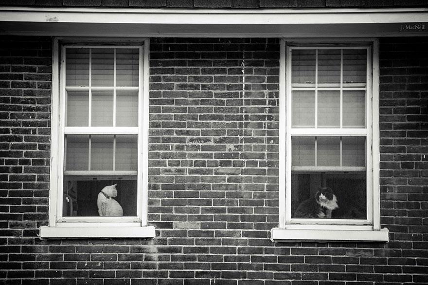 Таинственная кошачья жизнь в чёрно-белых фотографиях-13
