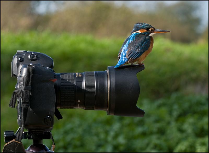 Птицы калининградской области фото с названиями тогда