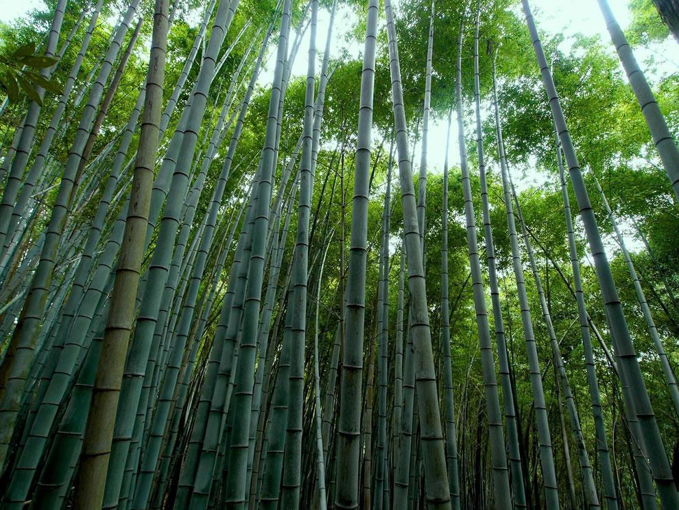 услышать жуткий картинка с бамбуком характеристики мужа жены